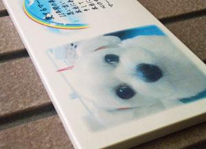 写真陶板制作例~ペット写真マルチーズ