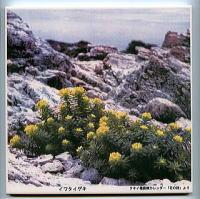 写真陶板制作例~高山植物